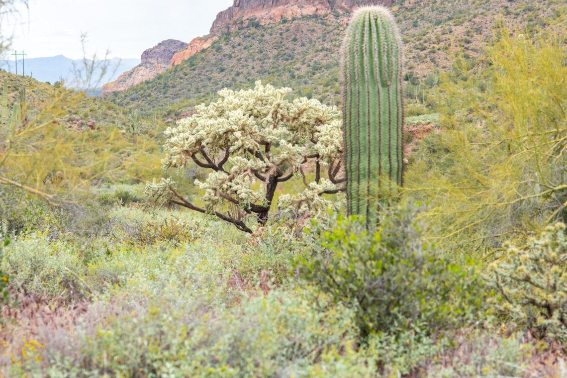 Bulldog Canyon Trail, Arizona